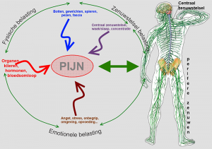 Pijn circle MNT-NR International Zenuwreflexzone